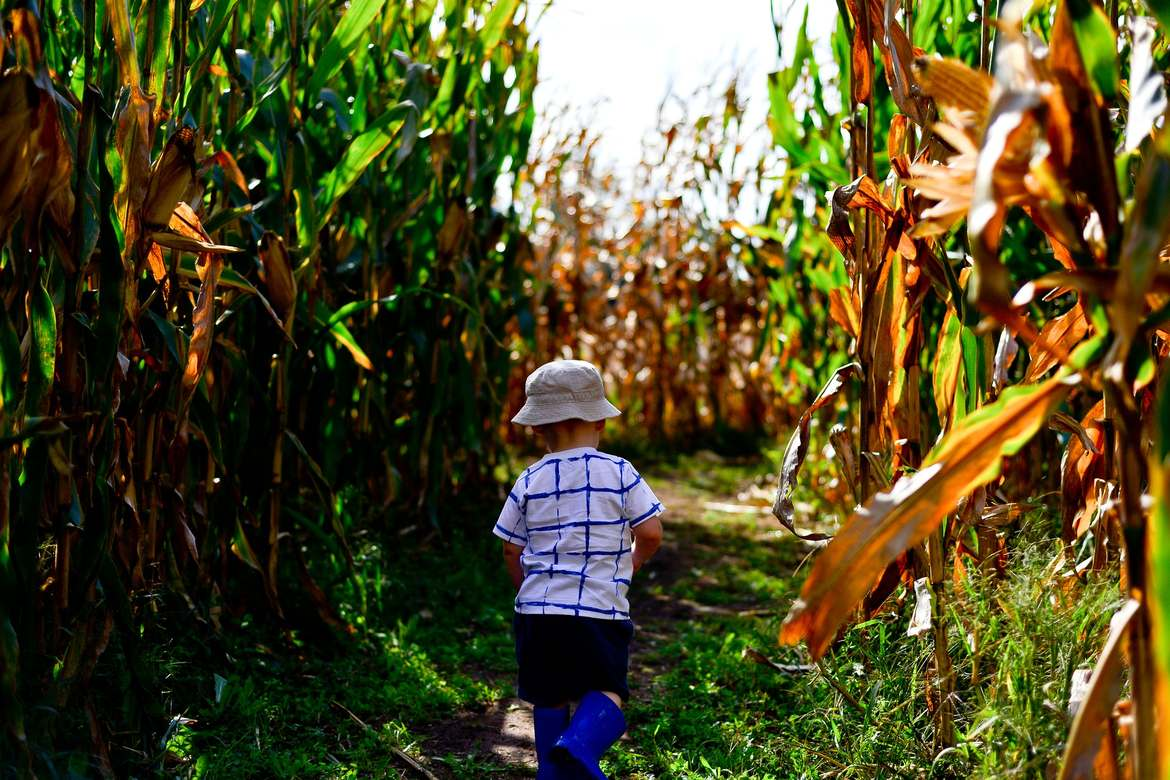 boy in corn maze