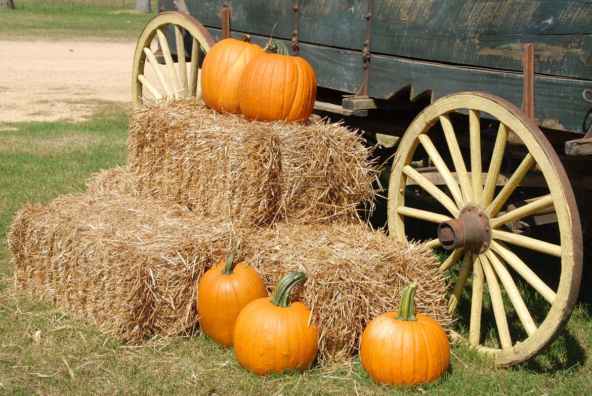 pumpkins and wagon wheel