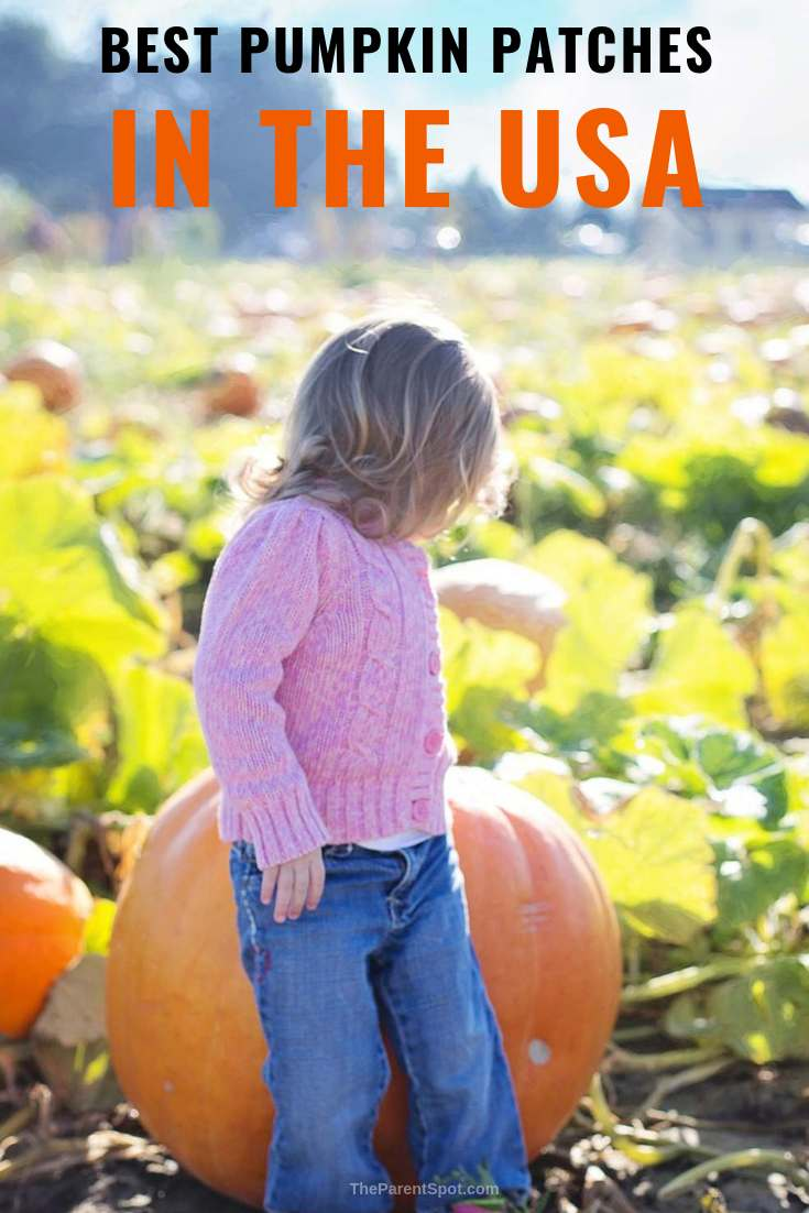 the best pumpkin patches in the USA