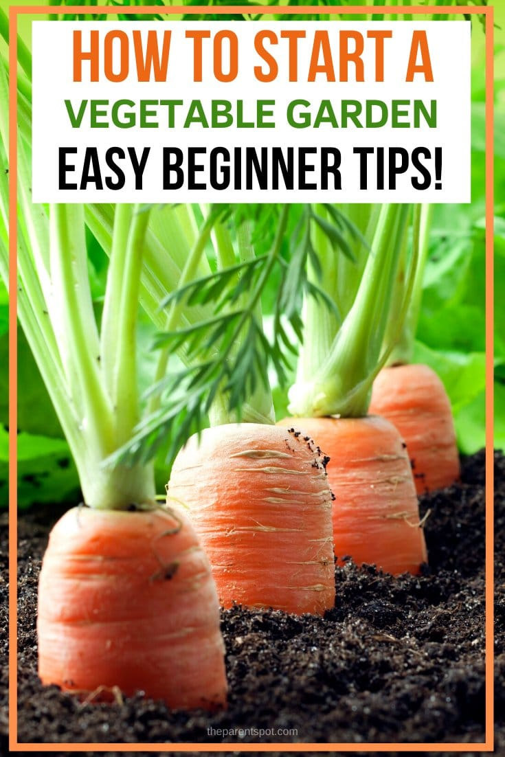 How to start a vegetable garden this spring tips for beginners