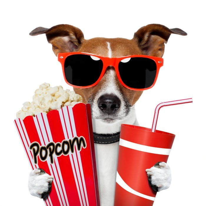 Dog watching a movie with popcorn and coke DP