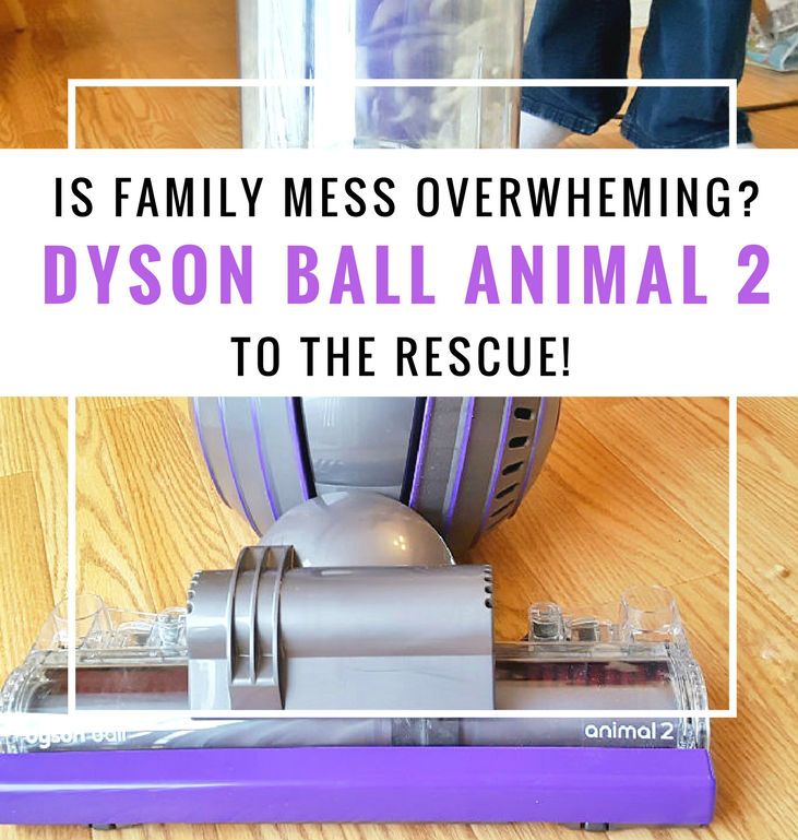 Dyson vacuum animal cleans up family messes