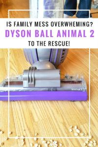 Dyson vacuum animal cleans up your family mess