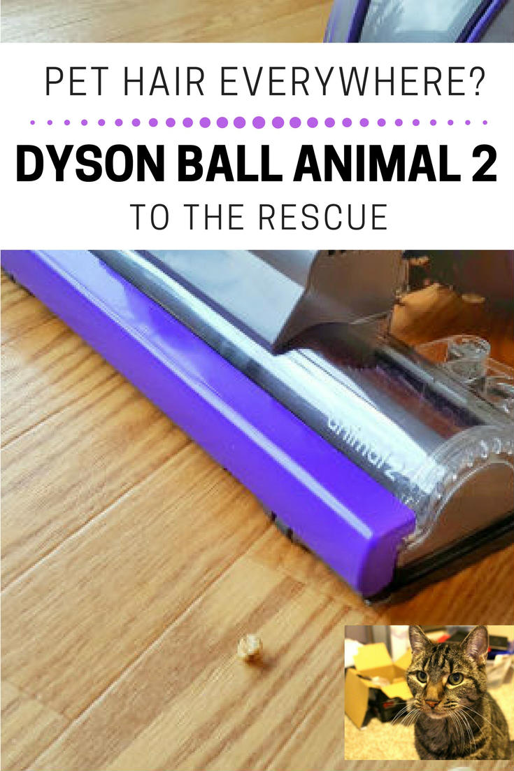 Meet The Dyson Ball Animal 2 Vacuum Our Secret Weapon