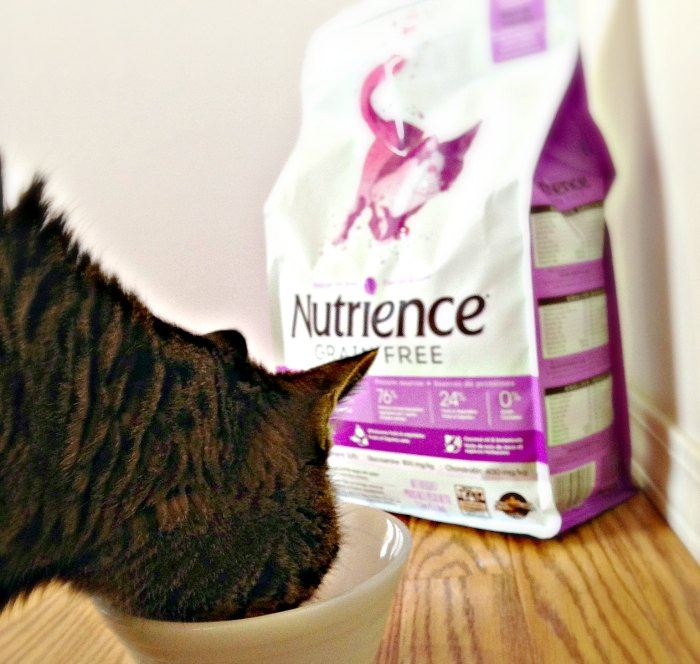 Kitty enjoying Nutrience Grain Free Pork Turkey and Venison for Cats