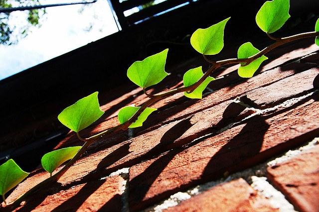Photo by sidewalk flying on Flickr