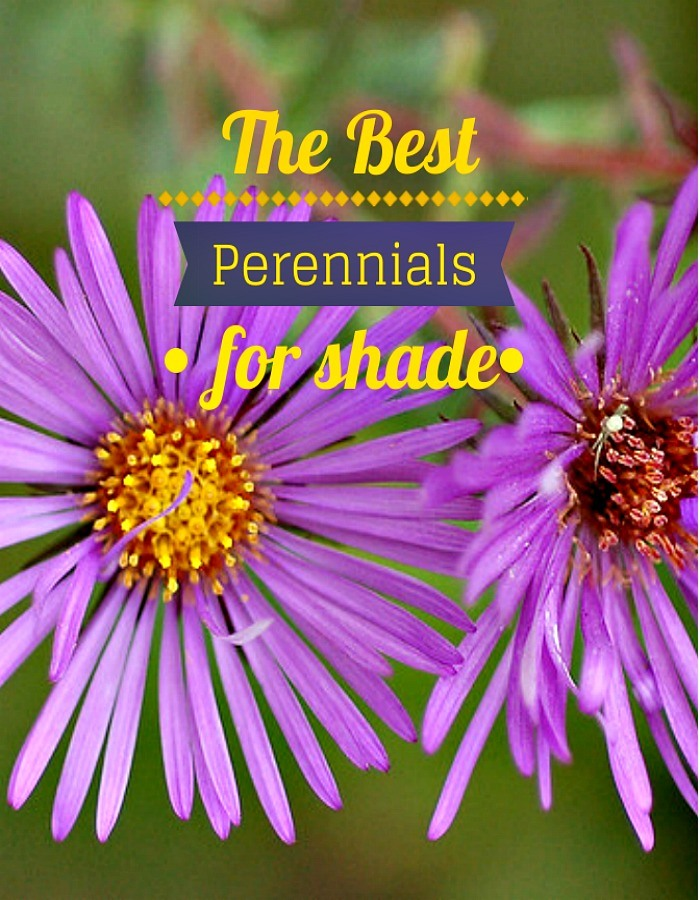 The Best Perennials for Shade