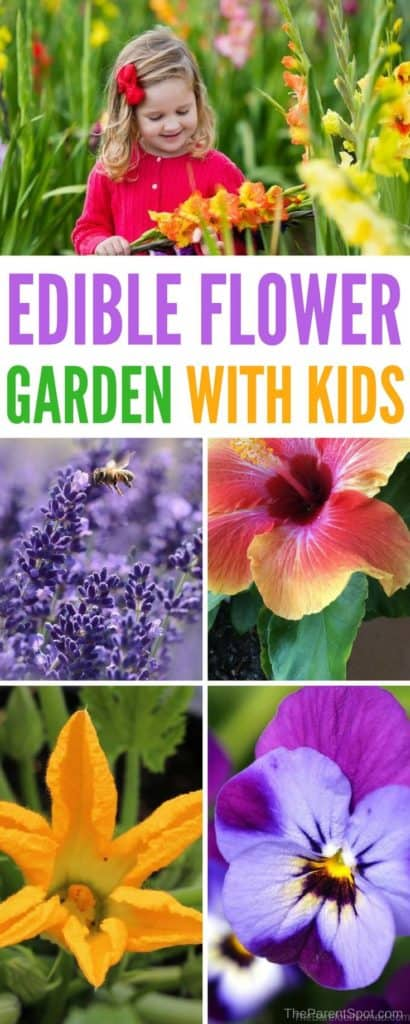 want to have some fun growing edible flowers with your kids? Try this easy kids flower garden! You can eat the results! #gardeningtips